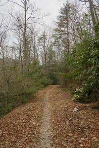Davidson River Trail -- 2,560'