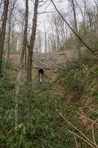 Davidson River Trail -- 2,570'