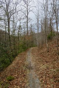 Davidson River Trail -- 2,550'