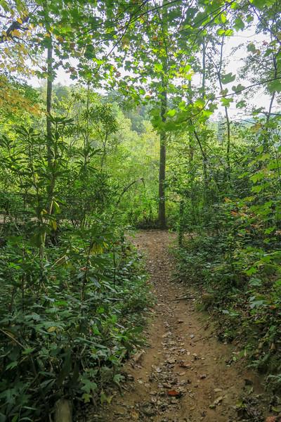 Deerfield Loop/Homestead Trail Junction -- 2,150'