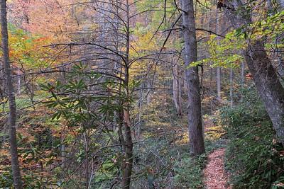 Farlow Gap Trail -- 3,650'