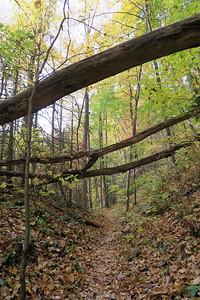 Farlow Gap Trail -- 3,460'