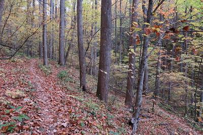 Farlow Gap Trail -- 3,350'