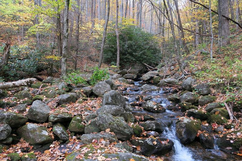 Farlow Gap Trail @ Daniel Ridge Creek -- 3,820'