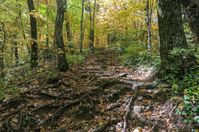 Farlow Gap Trail -- 4,350'