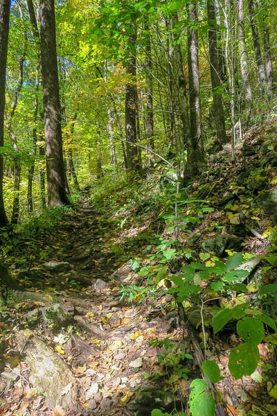 Farlow Gap Trail -- 3,850'