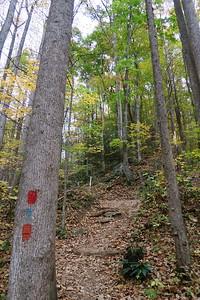 Farlow Gap/Daniel Ridge Loop Trail Junction -- 3,280'