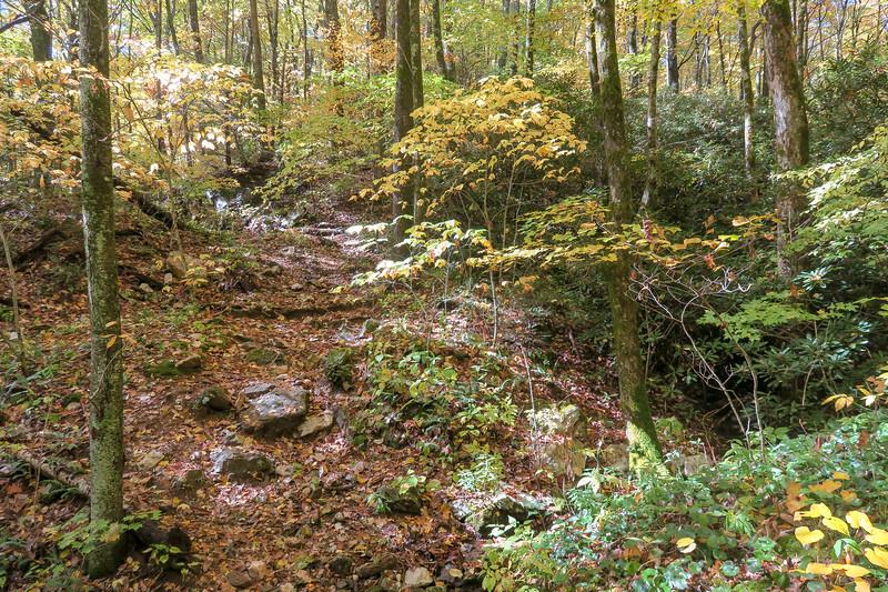 Farlow Gap Trail -- 4,100'