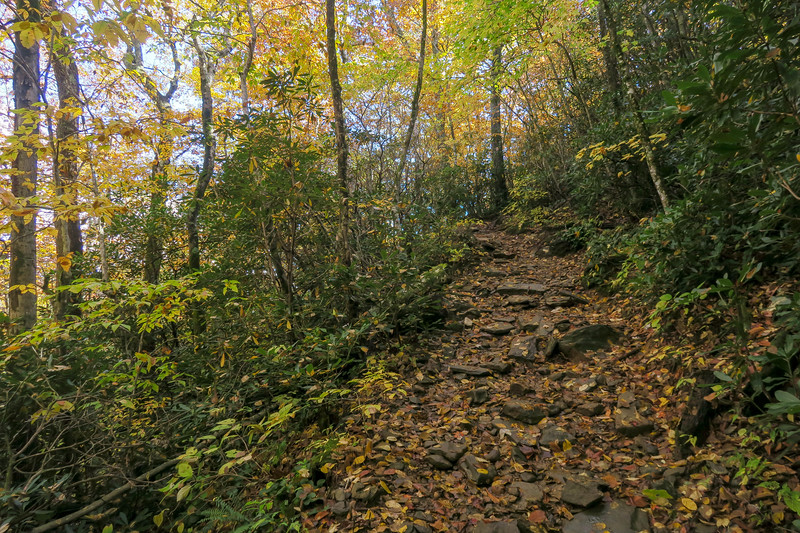 Farlow Gap Trail -- 4,250'