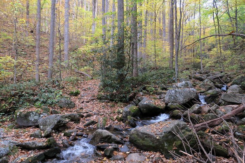 Farlow Gap Trail @ Right Fork Daniel Ridge Creek -- 3,300'