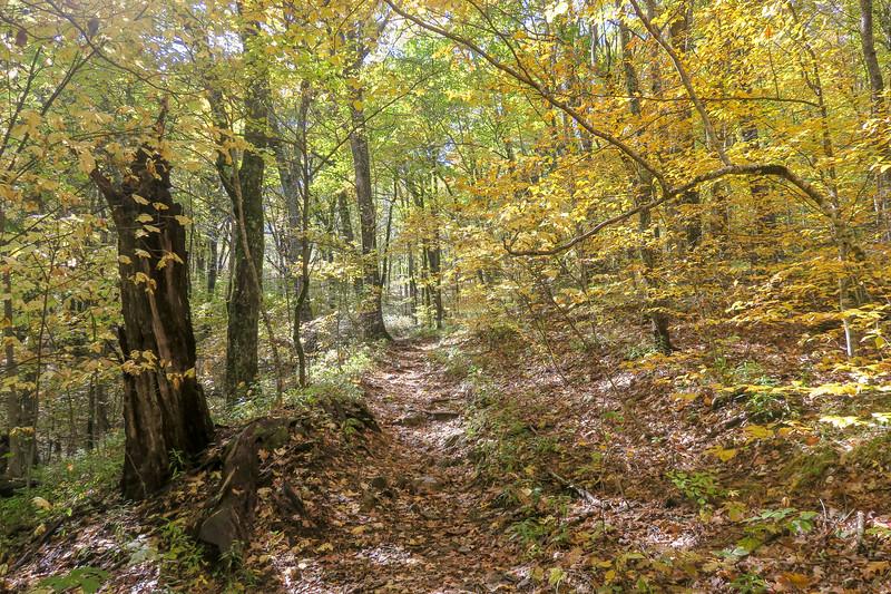 Farlow Gap Trail -- 4,450'