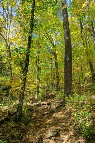 Farlow Gap Trail -- 4,050'