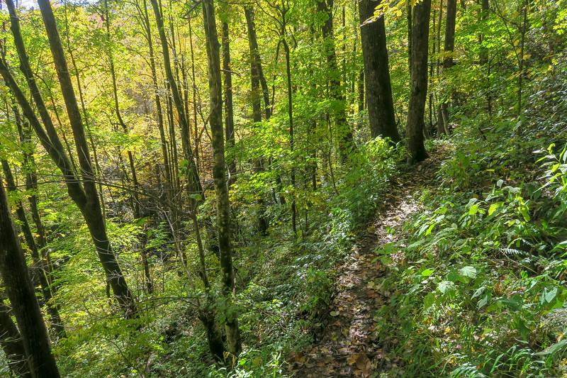 Farlow Gap Trail -- 3,620'