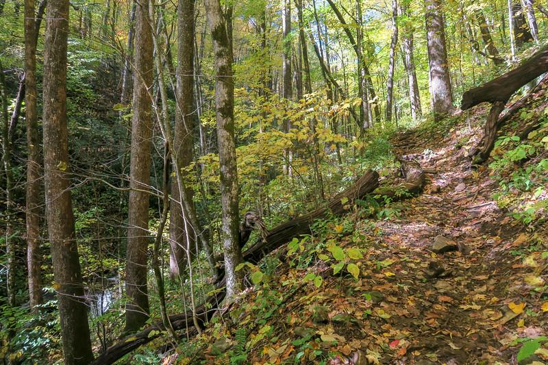 Farlow Gap Trail -- 3,800'