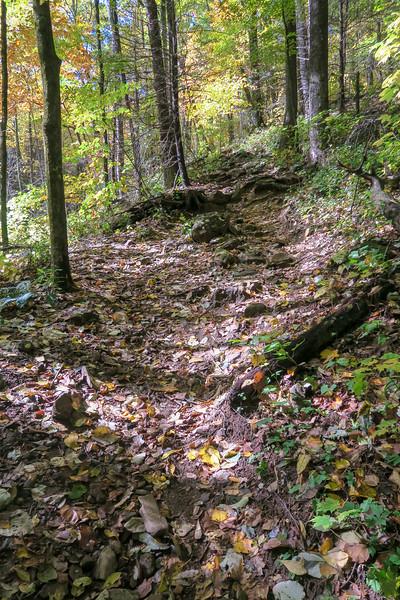 Farlow Gap Trail -- 3,950'