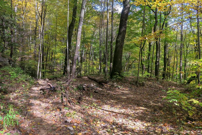 Farlow Gap Trail -- 4,120'