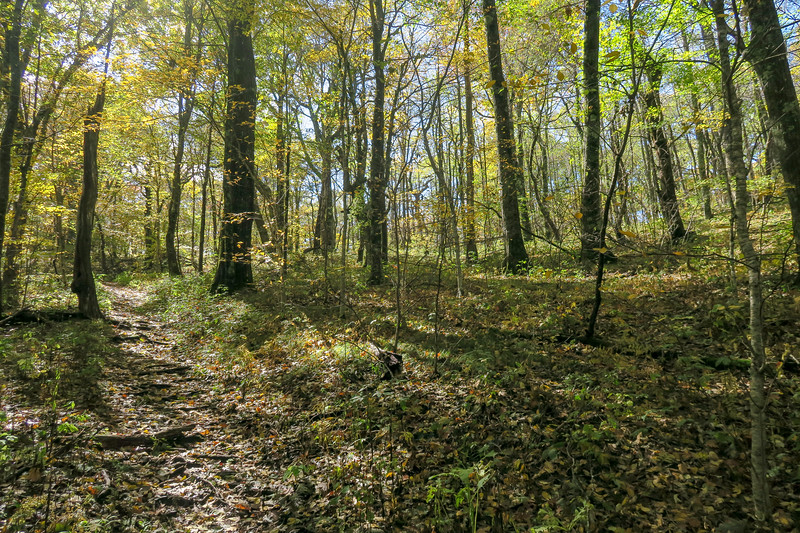 Farlow Gap Trail -- 4,500'
