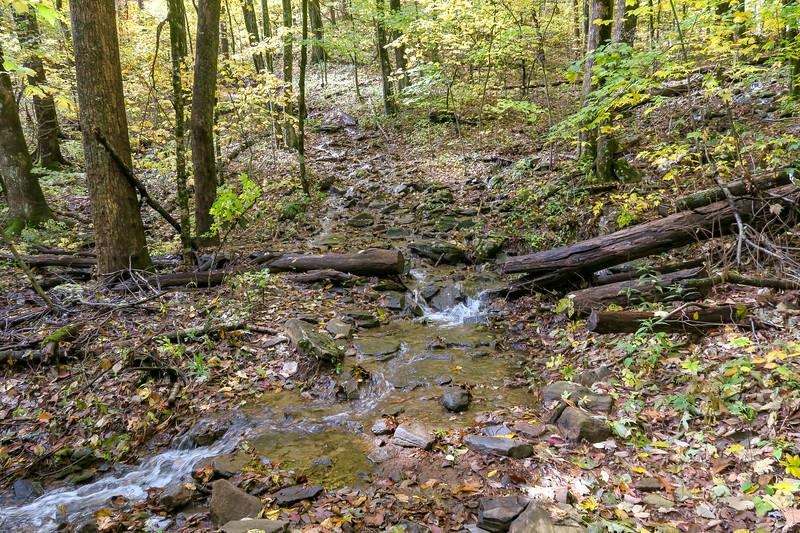 Farlow Gap Trail -- 4,150'