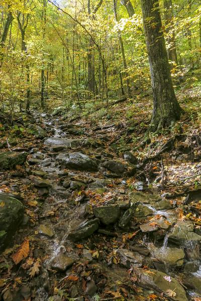 Farlow Gap Trail -- 4,200'