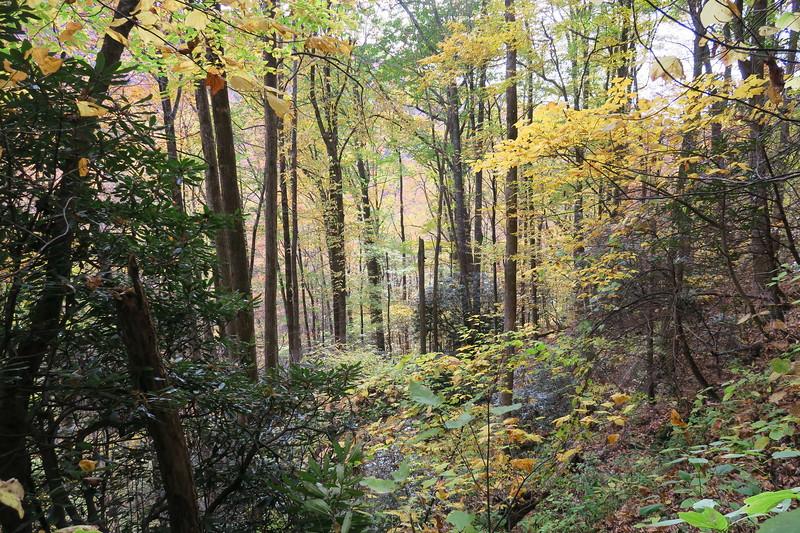 Farlow Gap Trail -- 3,500'