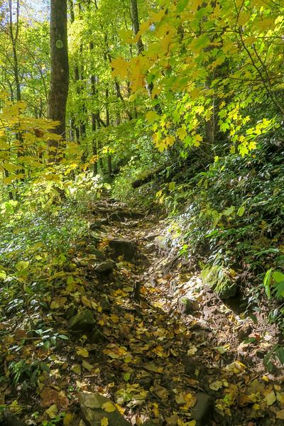 Farlow Gap Trail -- 3,600'