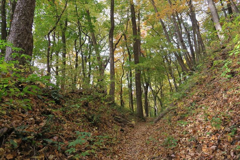 Farlow Gap Trail -- 3,580'