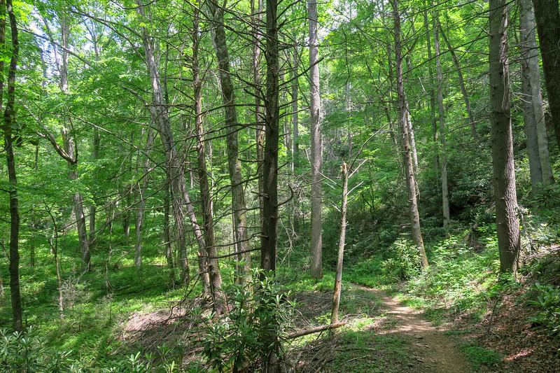 Fletcher Creek Trail -- 2,680'