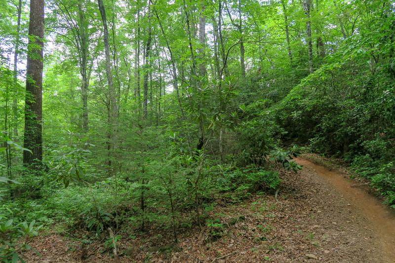 Fletcher Creek Trail -- 2,600'