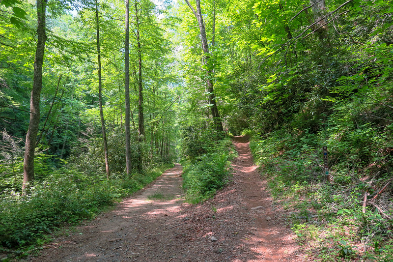 Fletcher Creek Trail/F.R. 142 Junction -- 2,430'