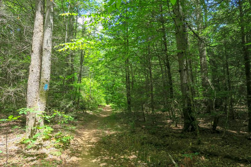 Fletcher Creek Trail -- 2,780'