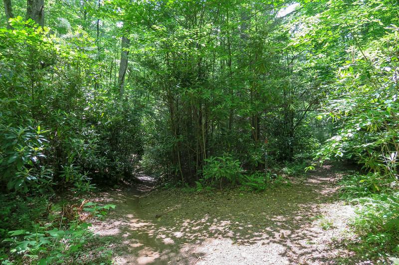 Fletcher Creek/Middle Fork Trail Junction -- 2,610'