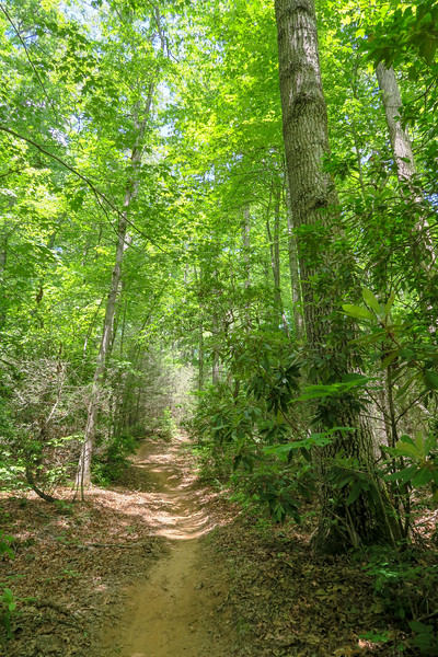 Fletcher Creek Trail -- 2,750'