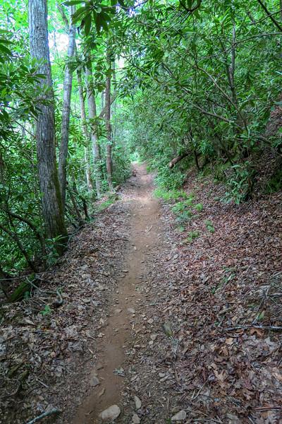 Fletcher Creek Trail -- 2,500'
