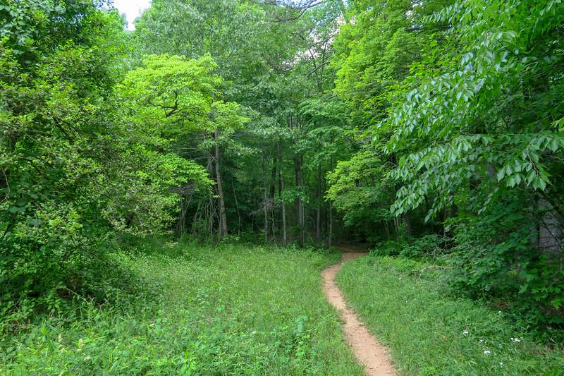 Fletcher Creek Trail -- 2,820'