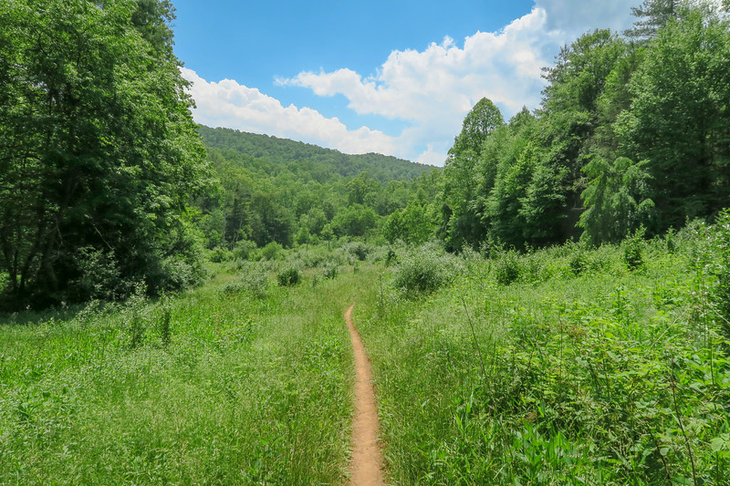 Fletcher Creek Trail -- 2,640'