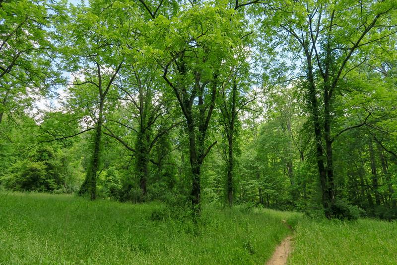 Fletcher Creek Trail -- 2,800'