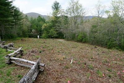 Forest Festival Trail -- Conifer Plantation