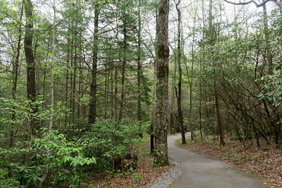 Forest Festival Trail -- Timber Stand Improvement