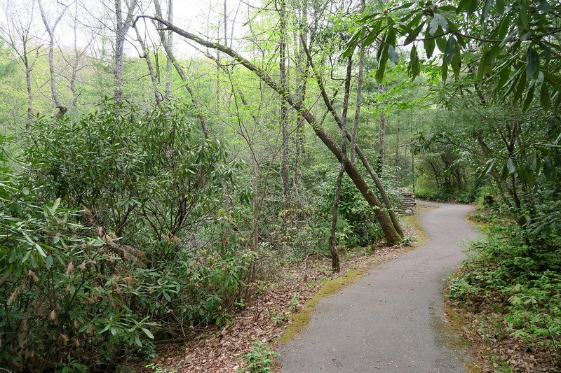 Forest Festival Trail -- Rhododendron Thicket