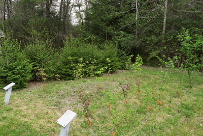 Forest Festival Trail -- Seedling Nursery