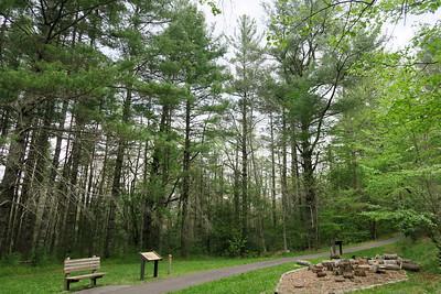 Forest Festival Trail -- Pine Plantation
