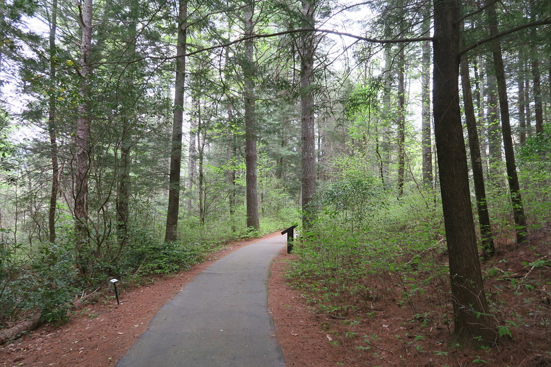 Forest Festival Trail -- Protective Cover