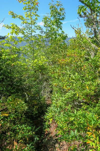 Fork Mountain Trail -- 4,970'