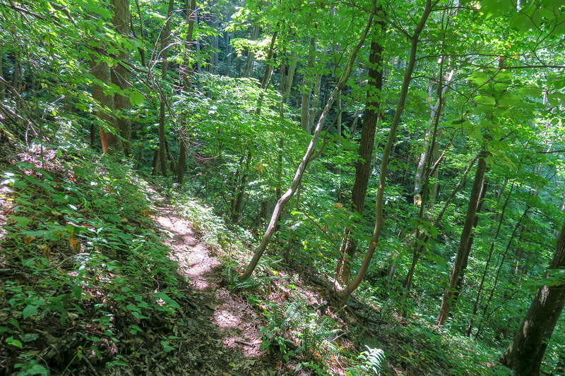 Fork Mountain Trail -- 4,180'