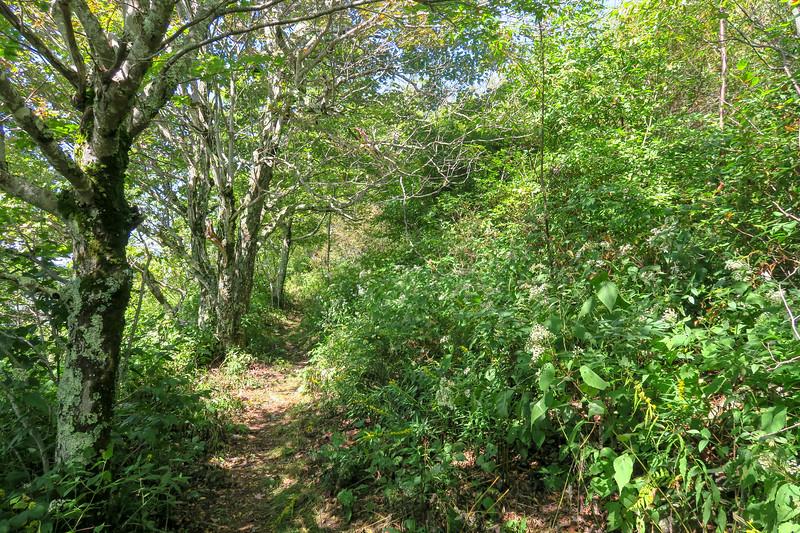 Fork Mountain Trail -- 5,440'