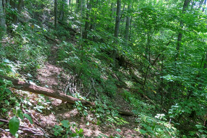 Fork Mountain Trail -- 4,610'