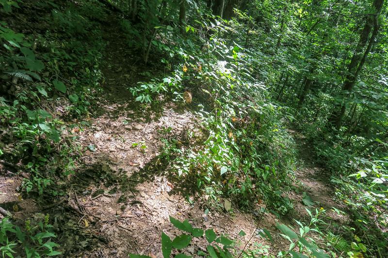 Fork Mountain Trail -- 4,240'
