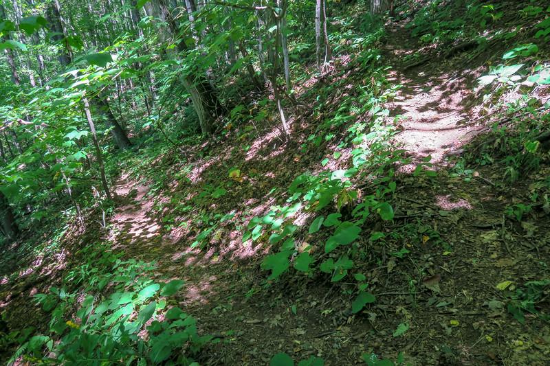 Fork Mountain Trail -- 4,270'