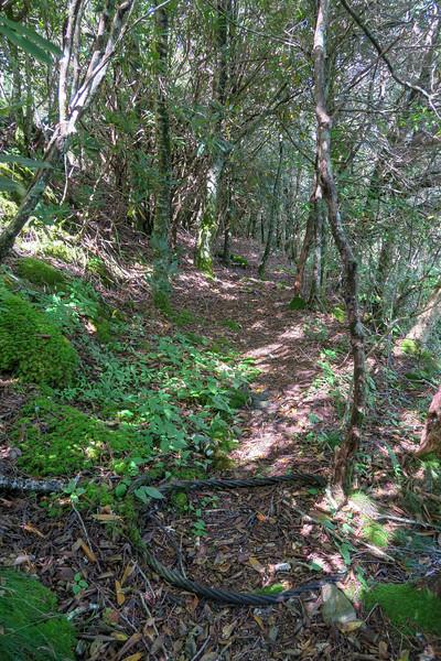 Fork Mountain Trail -- 5,550'