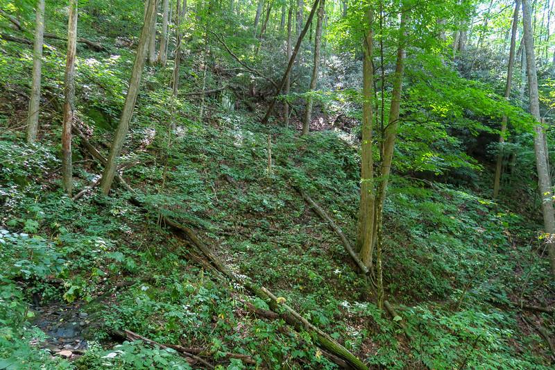 Fork Mountain Trail -- 4,120'